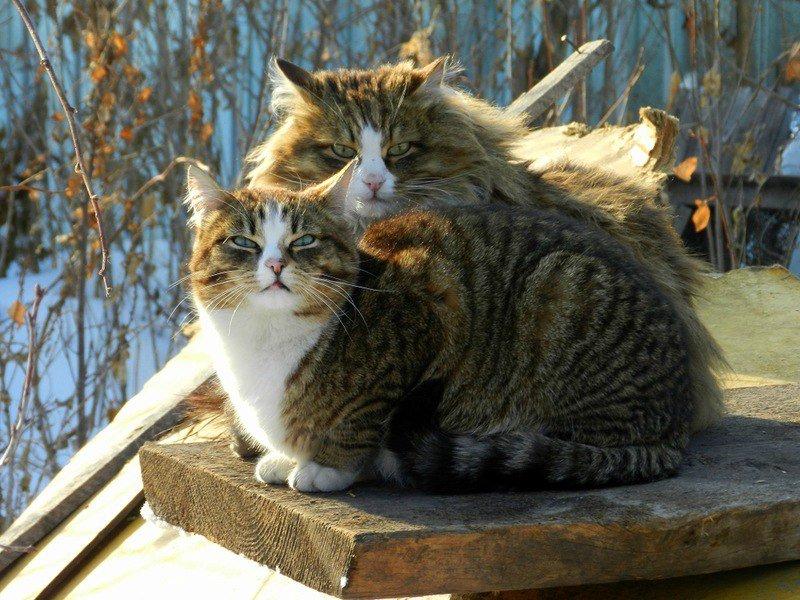кошка мартовская картинки стенах живет веселье