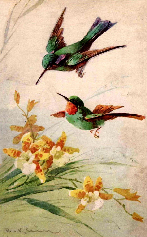 Днем, колибри открытка