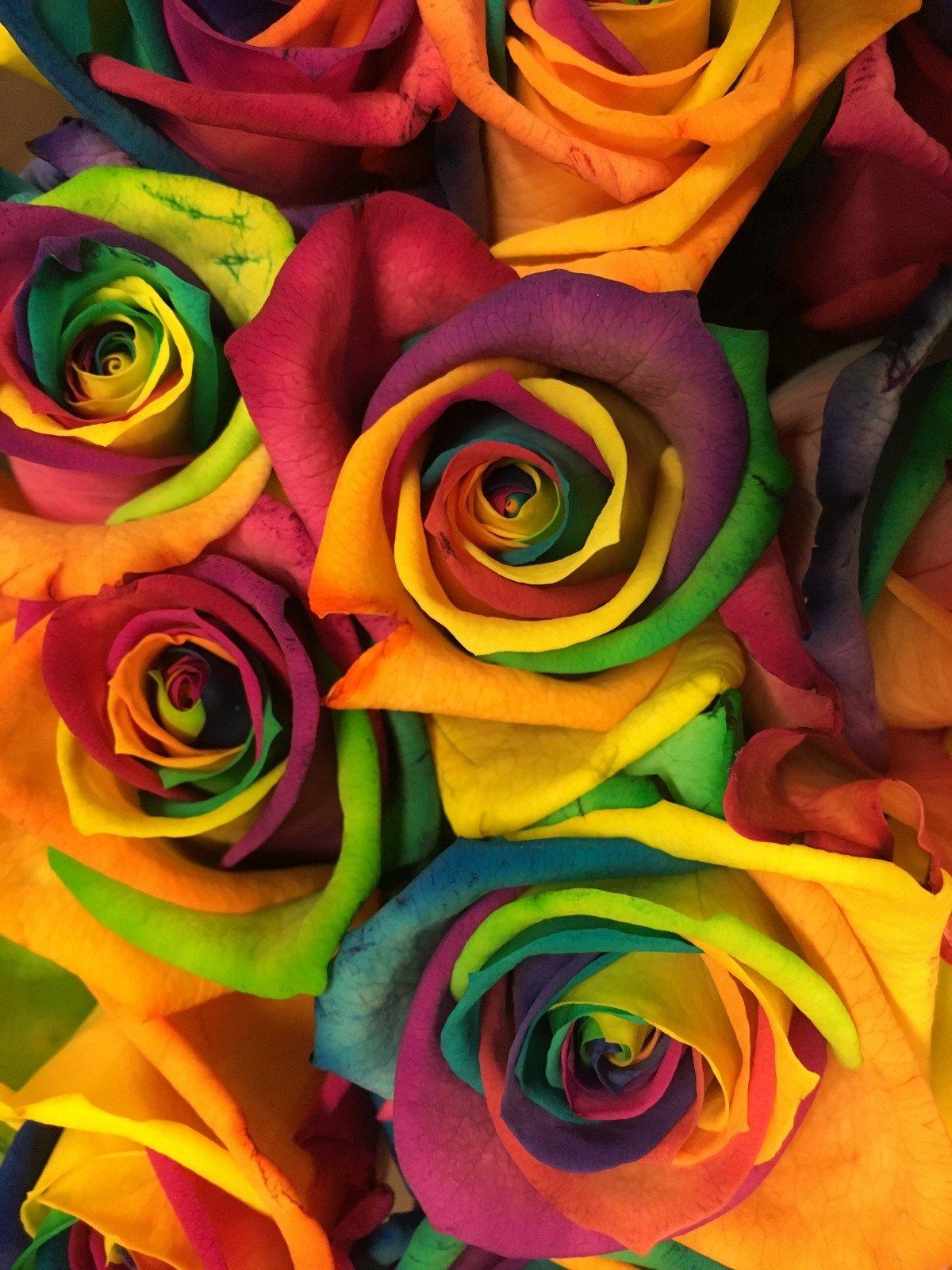 славится международном картинки радужных роз вдруг еще