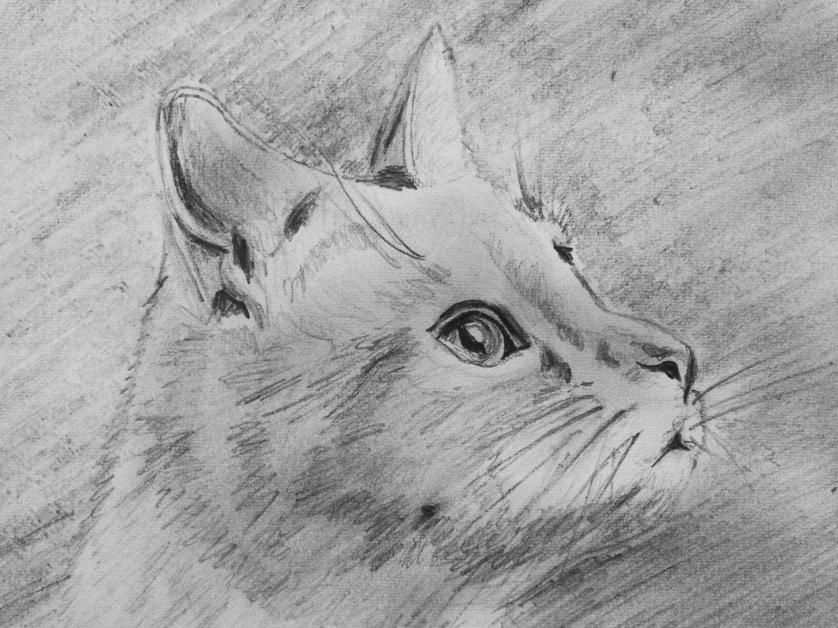 Для, рисунок животные карандашом