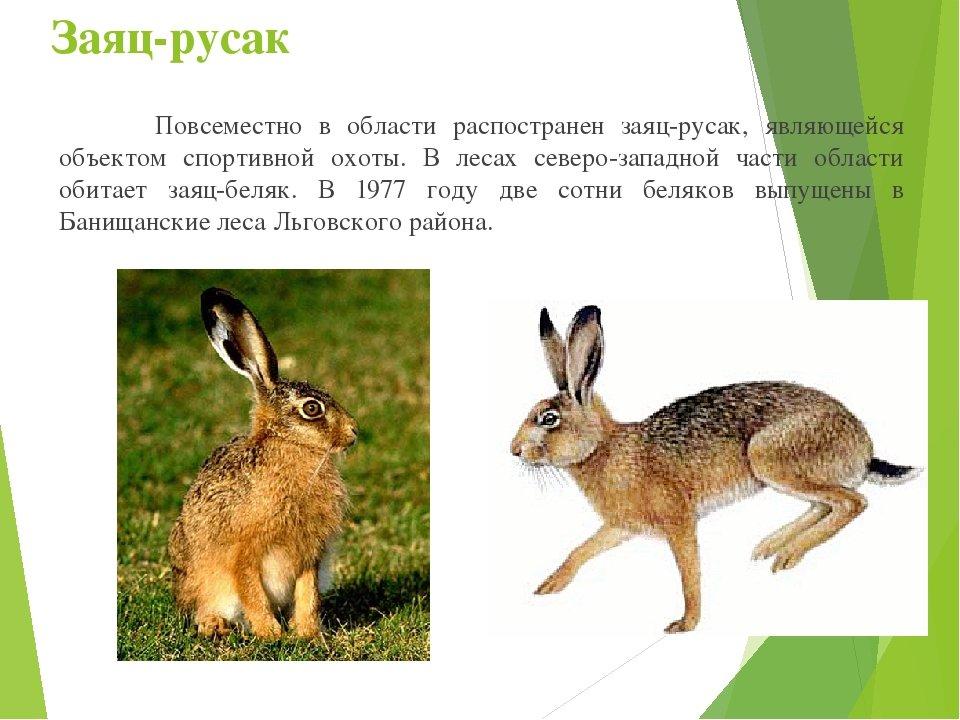 животные курской области фото и описание чистые