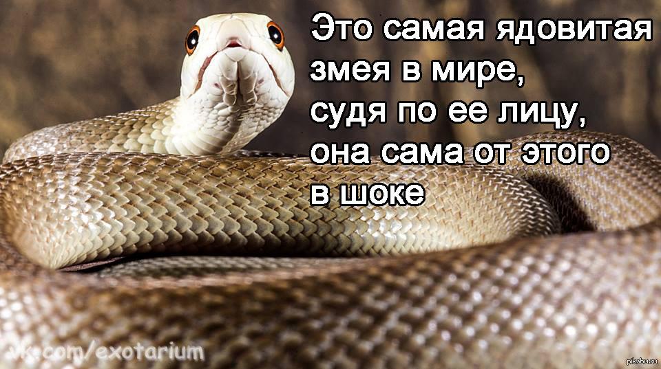 Февраля, картинки про змей с надписями