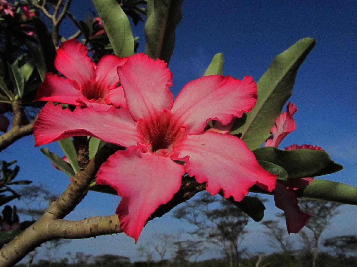 Цветы африки в картинках
