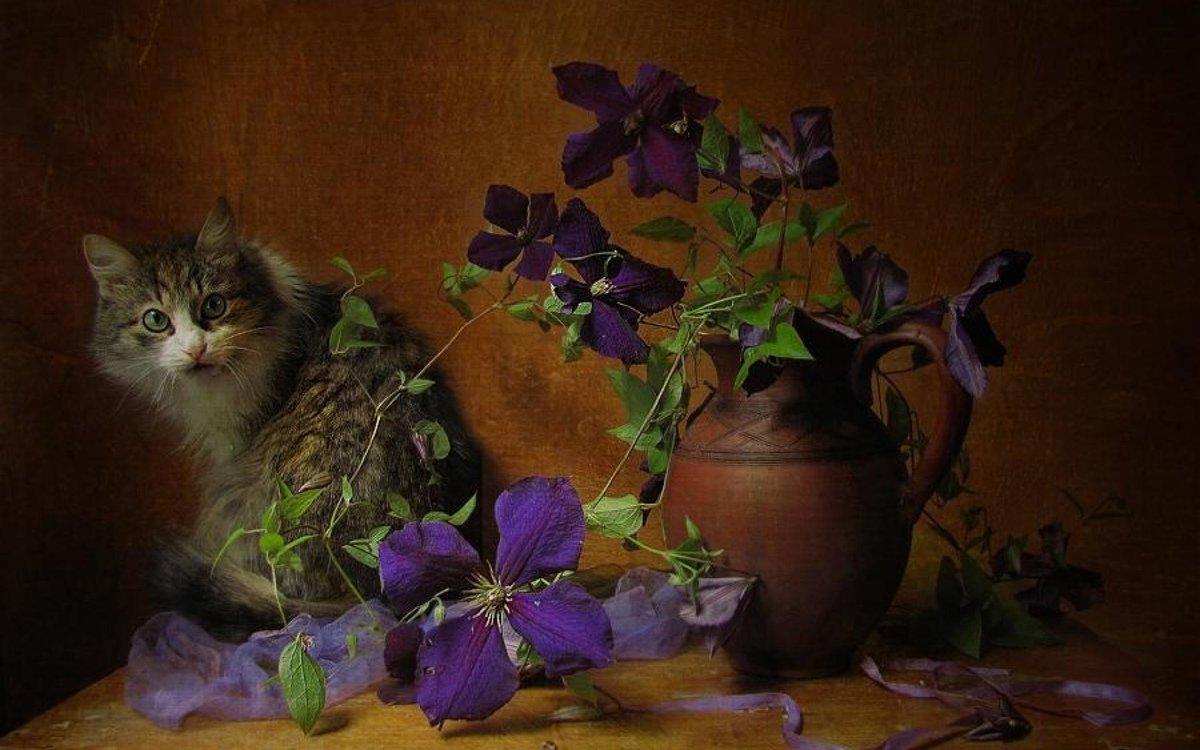 кто-то уже картинки фотонатюрморты с кошками ушла жизни