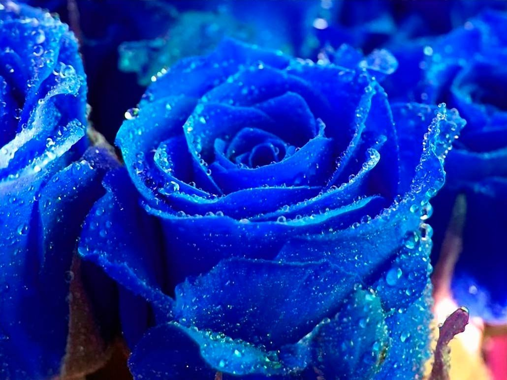Доброе, открытки с голубыми розами