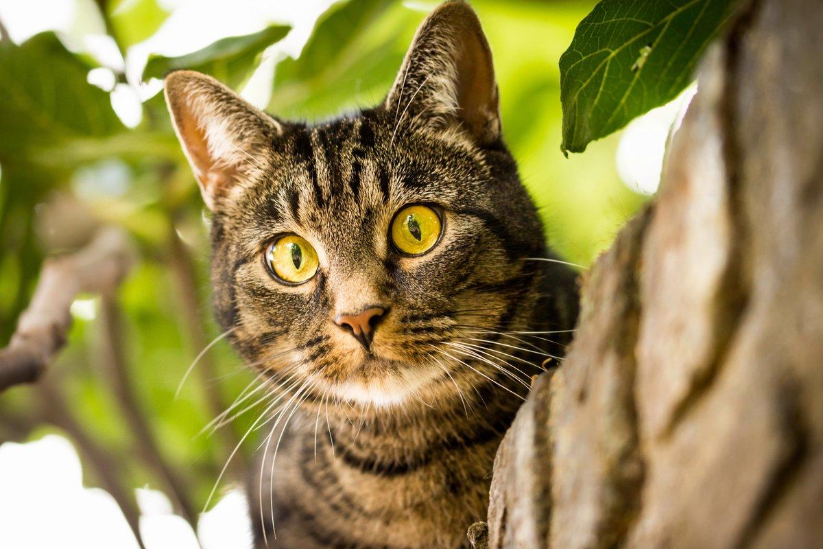 Поздравление, картинки с котами картинки