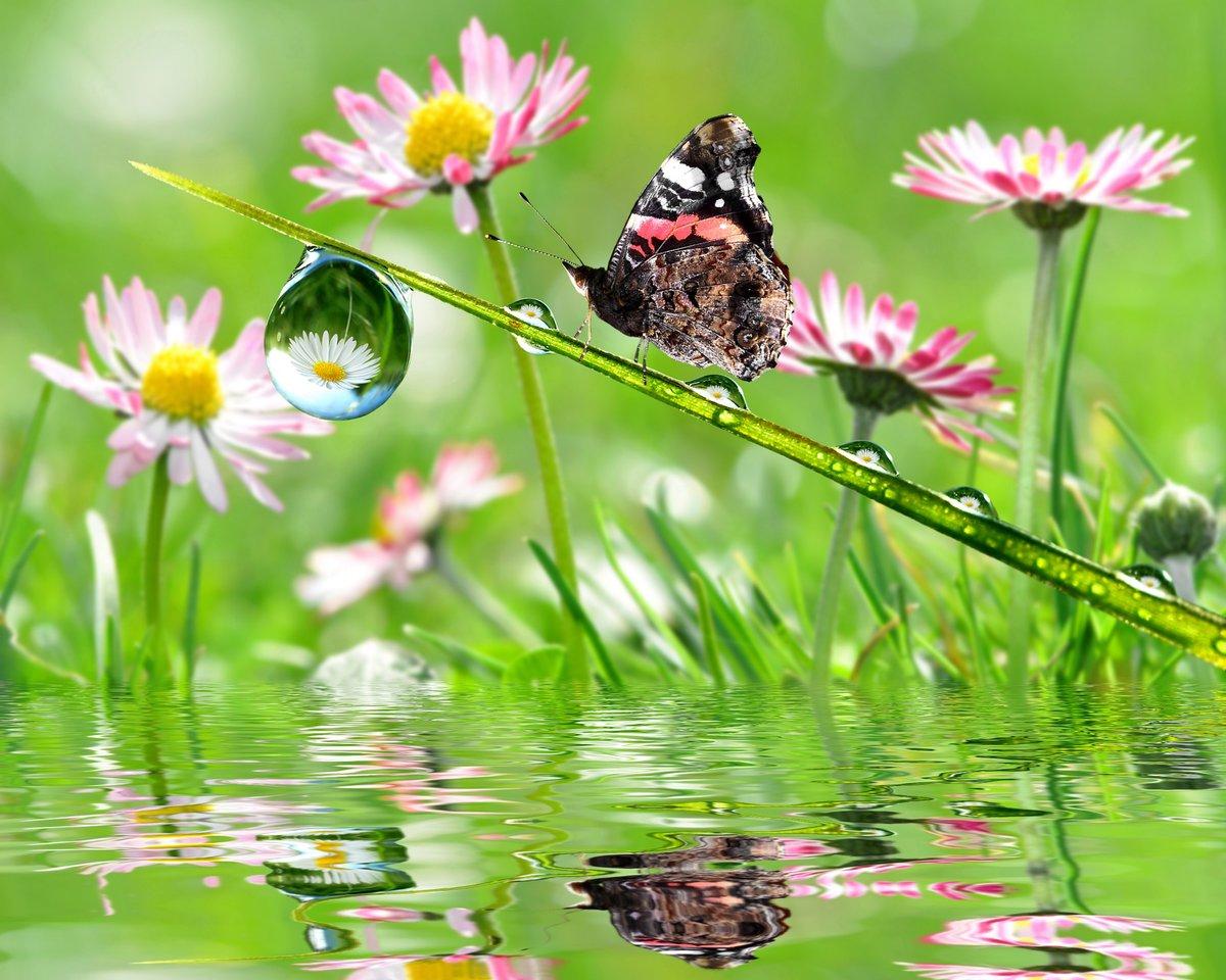 Для друзей, красивые картинки с цветами бабочками птичками росой дождем