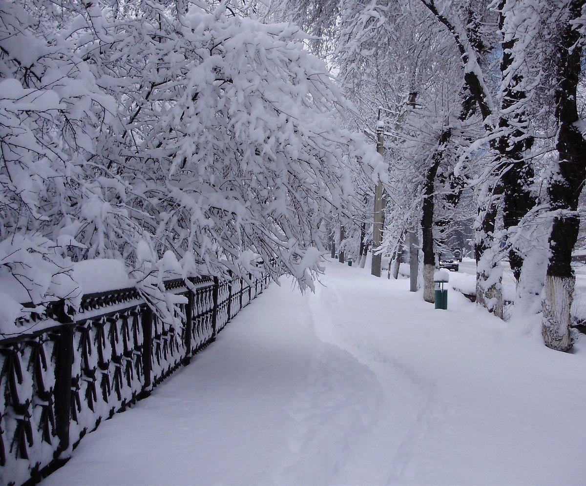 снежная тропинка фото зимние своему
