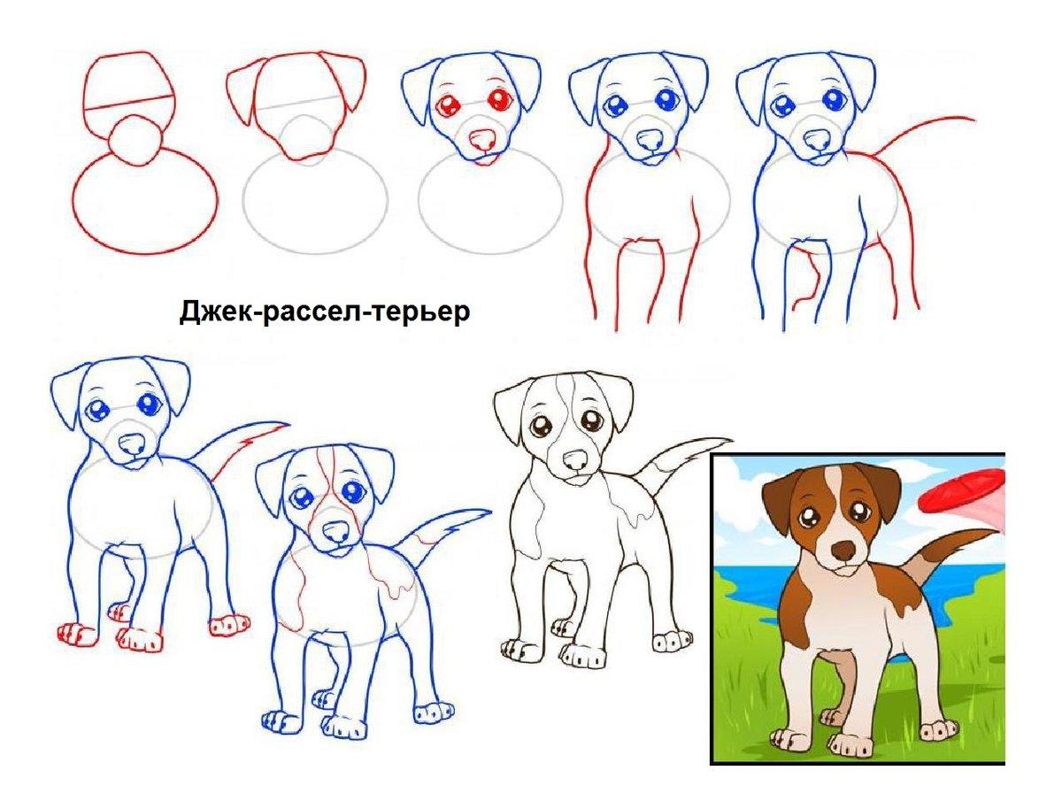 рисунки собак поэтапно для начинающих цены, честные отзывы