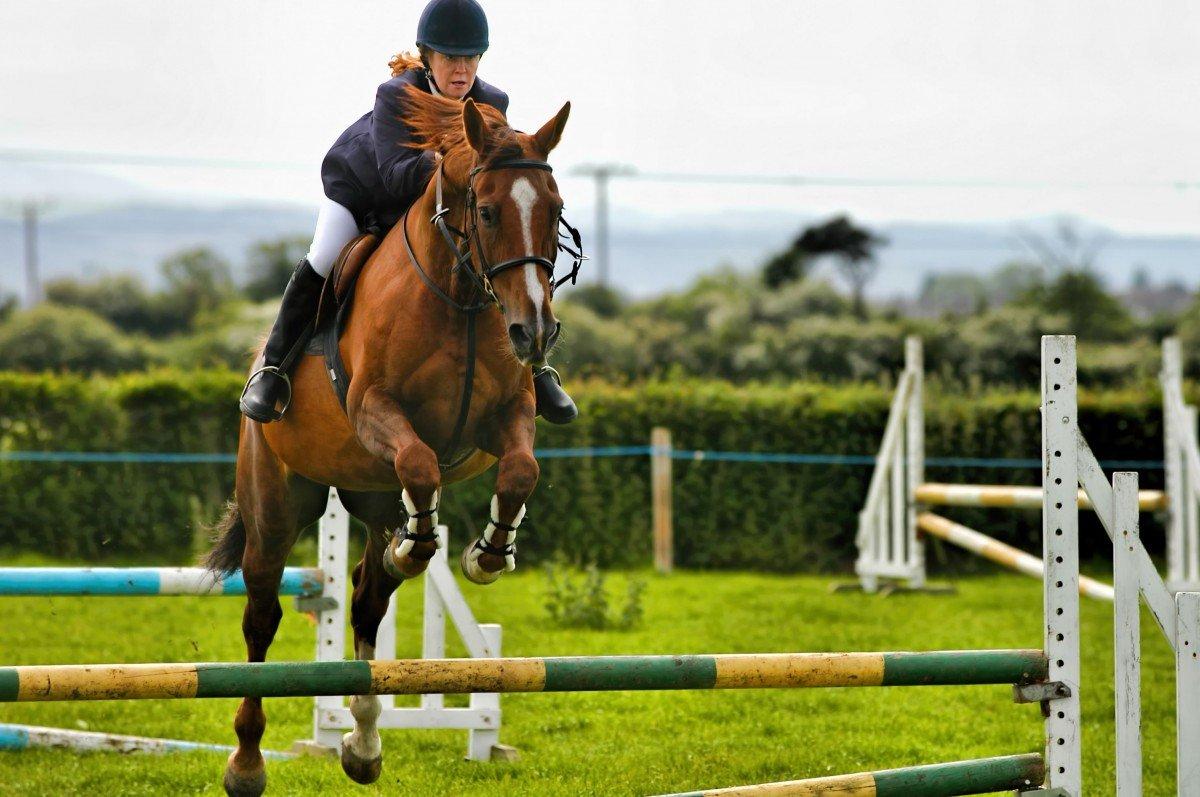 Картинки лошади спортивные