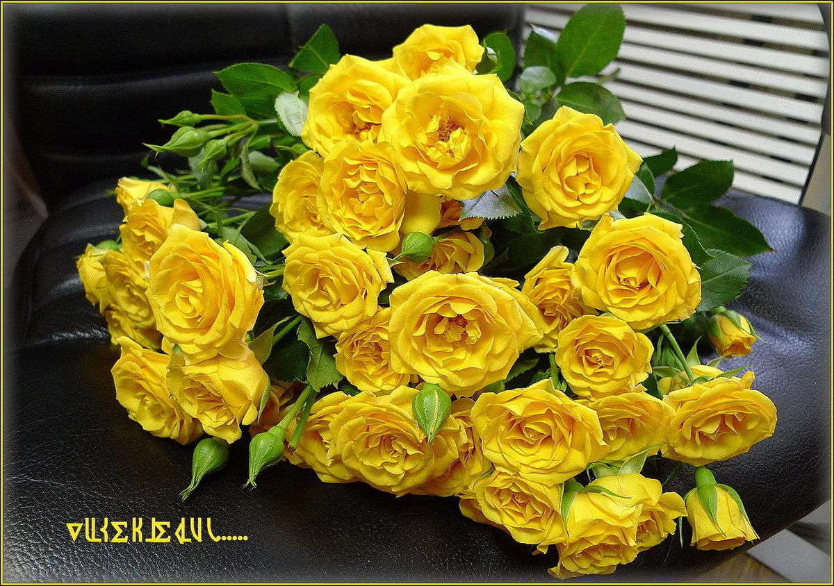 Желтые розы с днем рождения фото