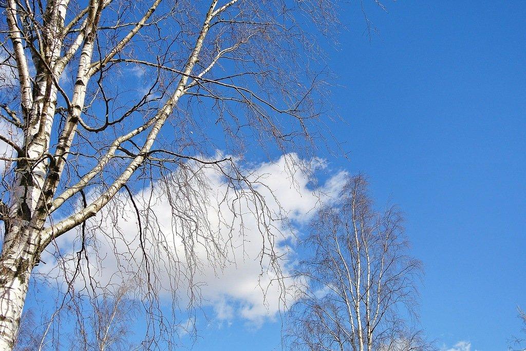 обои на рабочий стол небо облака и березы в апреле