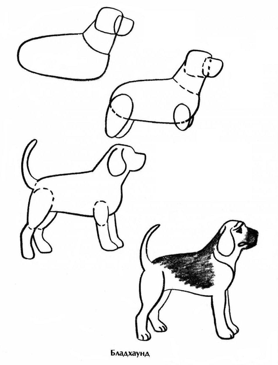 Рисунки кошек и собак поэтапно