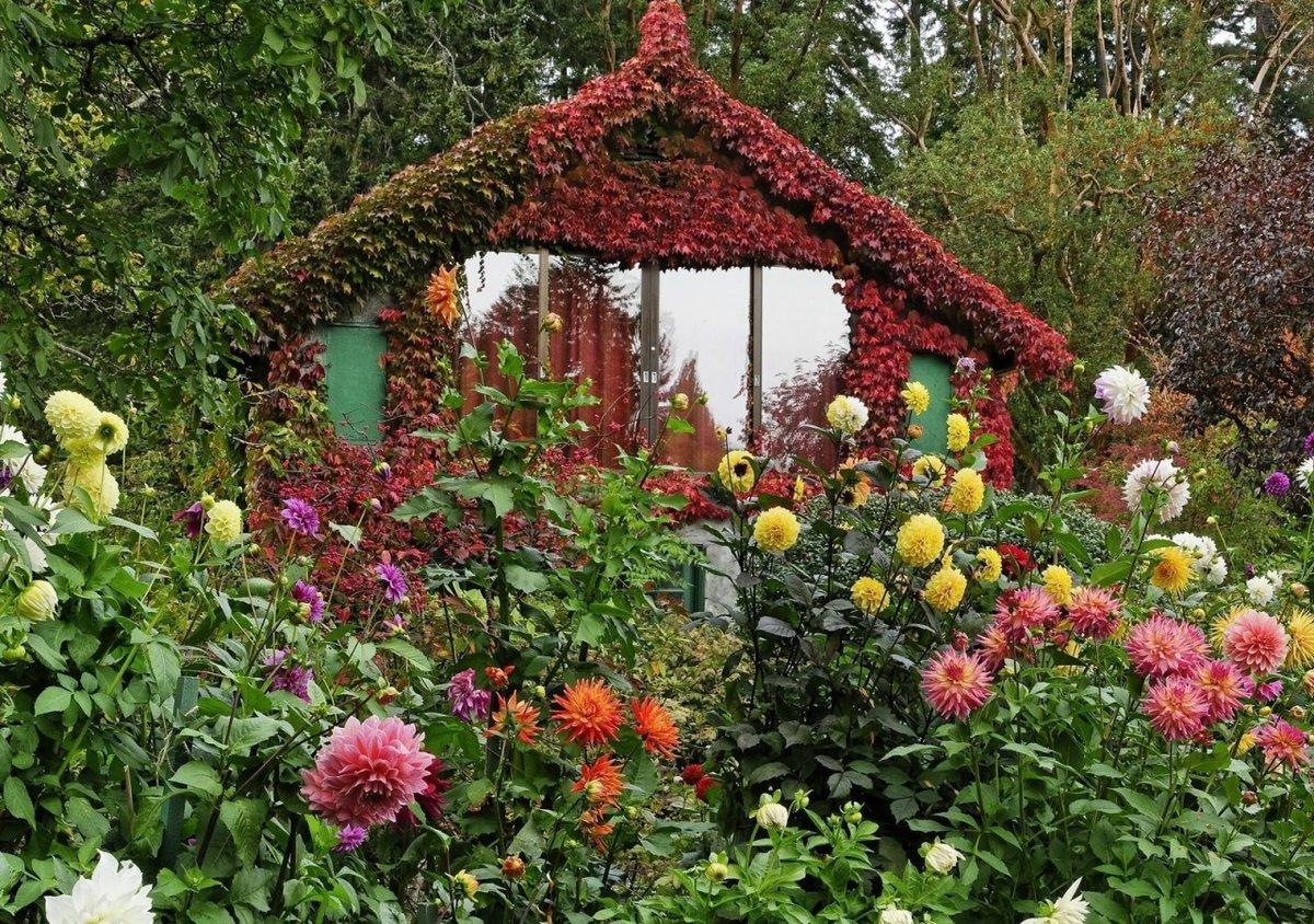Сад и цветы сада картинки
