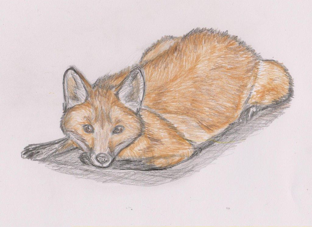 Иллюстрации к басне лев и лисица обслуживающий персонал