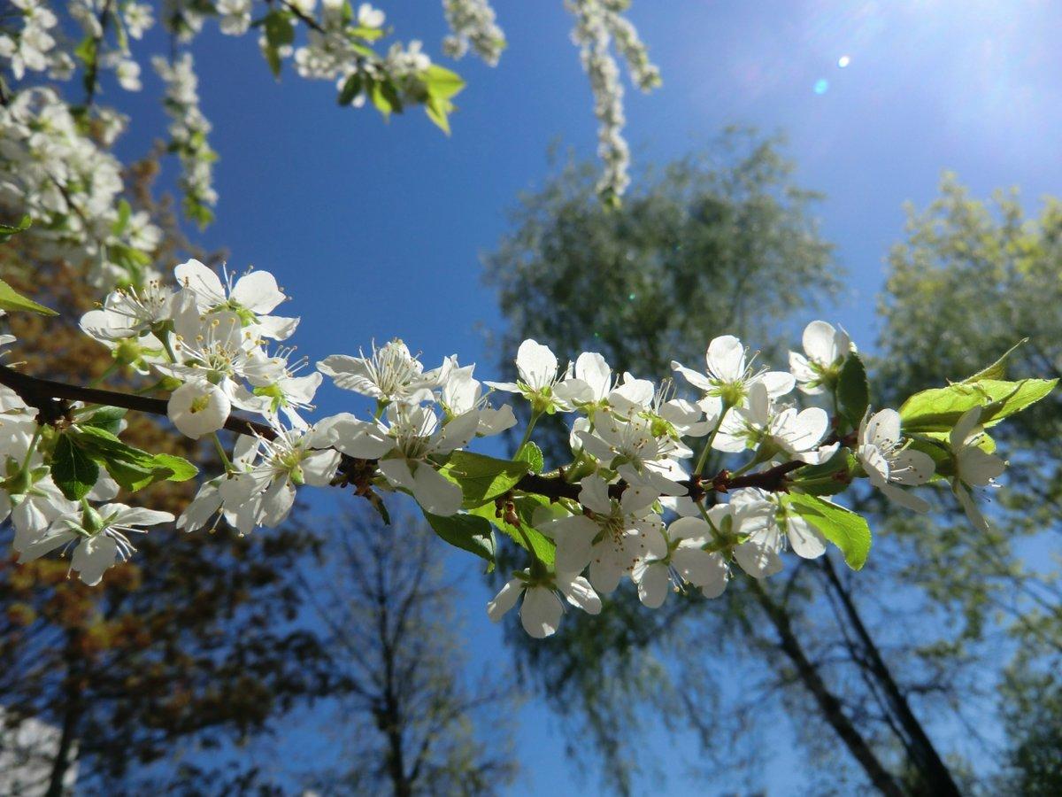 Картинки весна май, февраля