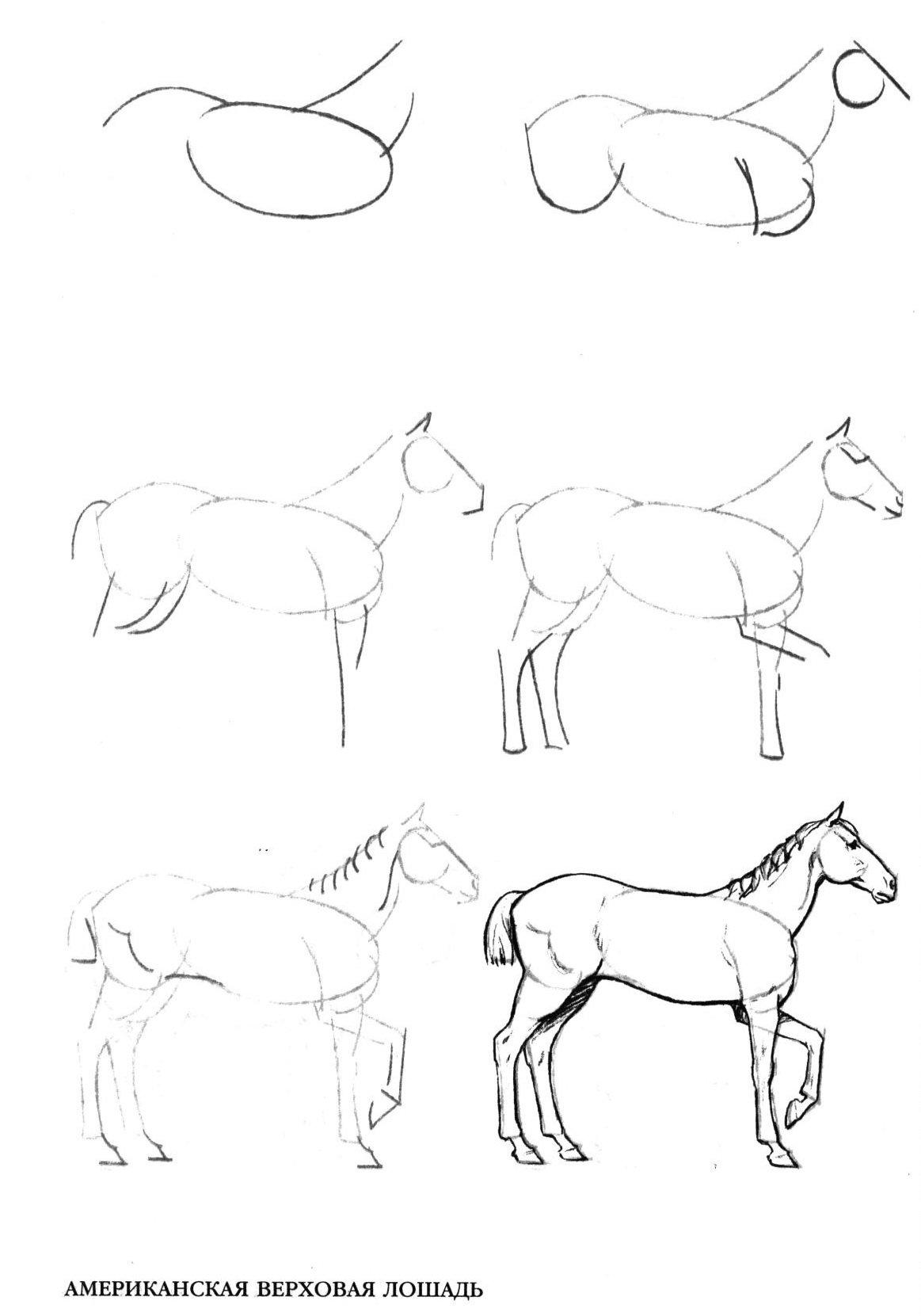 Красивые картинки рисунки карандашом для начинающих поэтапно, бассейне картинки надписями