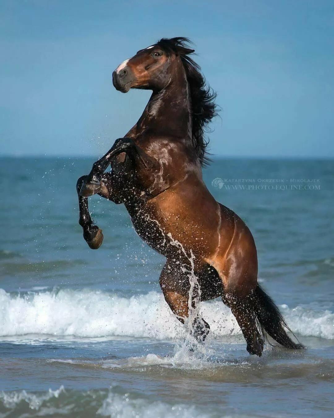 картинки убегаю от коня все