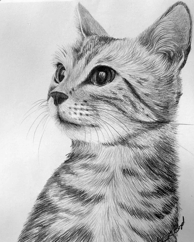 Рисунок кошка карандашом