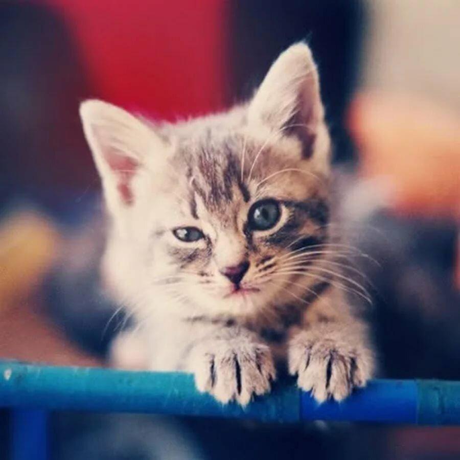 Картинки в вк на аву кошки