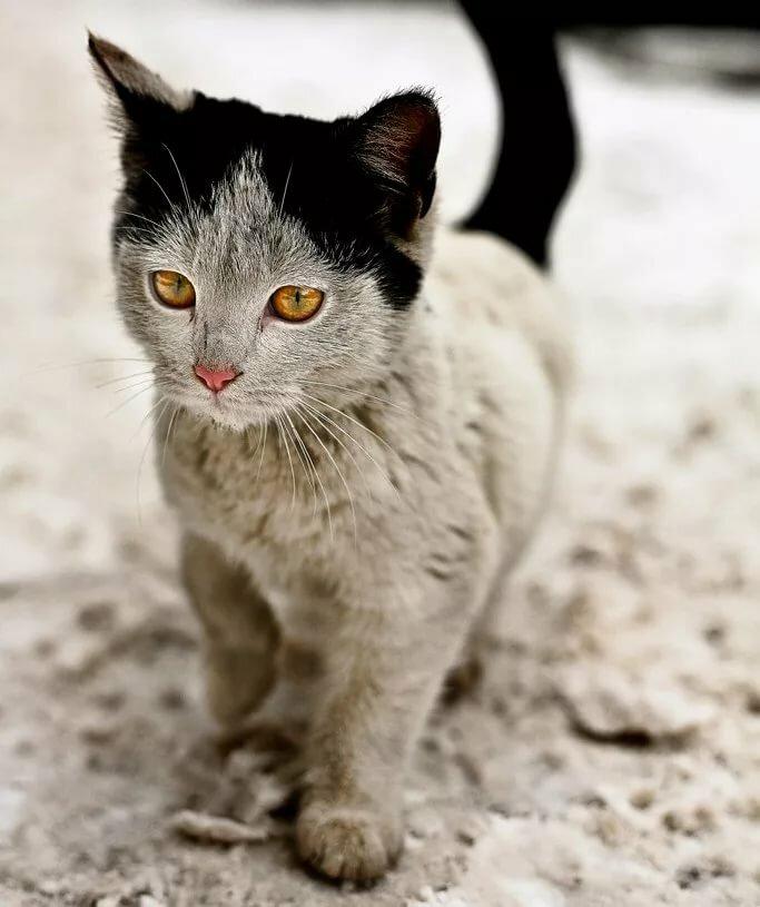 поняли, невероятные коты фото при тюрьме пункт