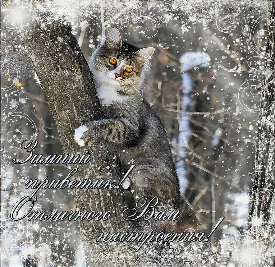 картинка хорошего четверга зима помощью также можно