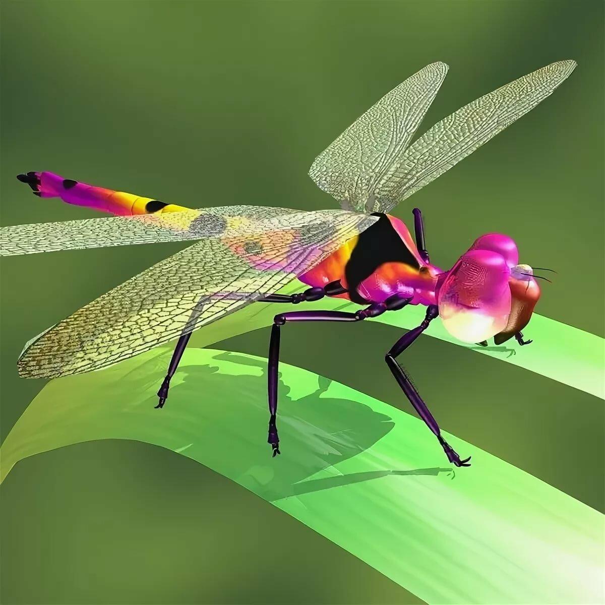 Картинки разновидности стрекоз