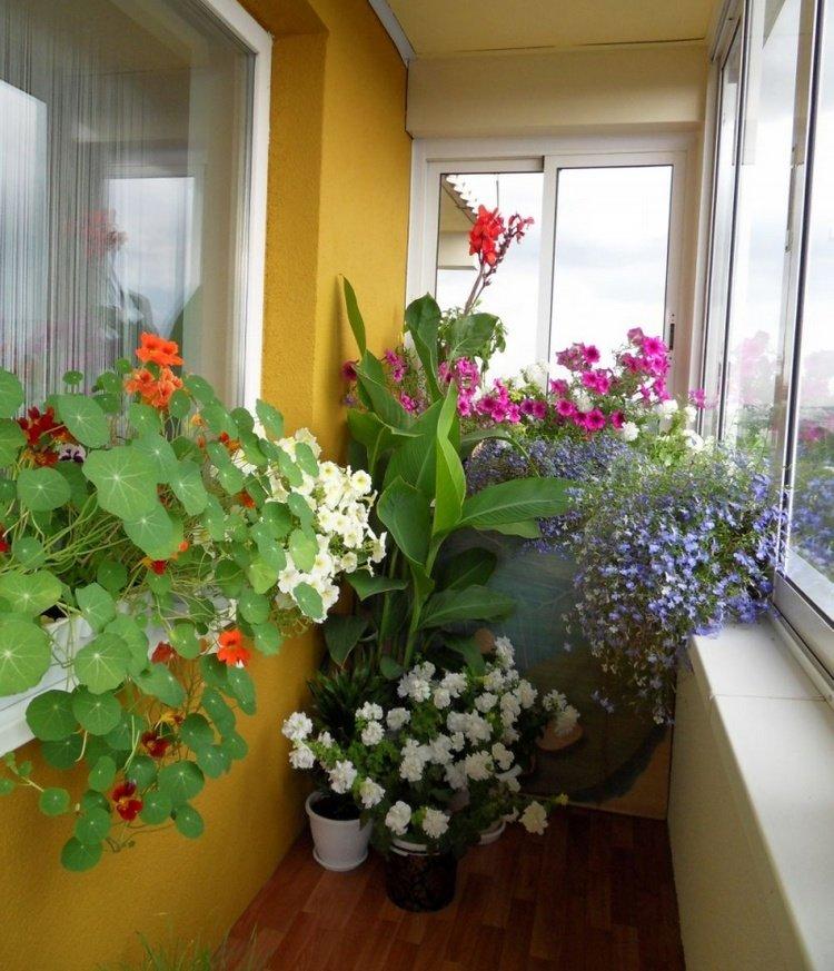 свою красиво на балконе разместить цветы фото кто них