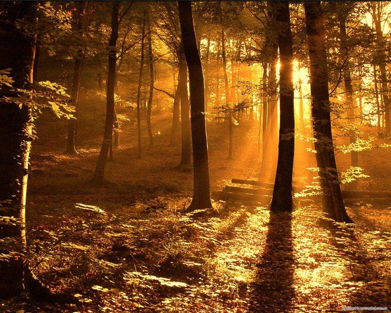 красивый закат в лесу класс