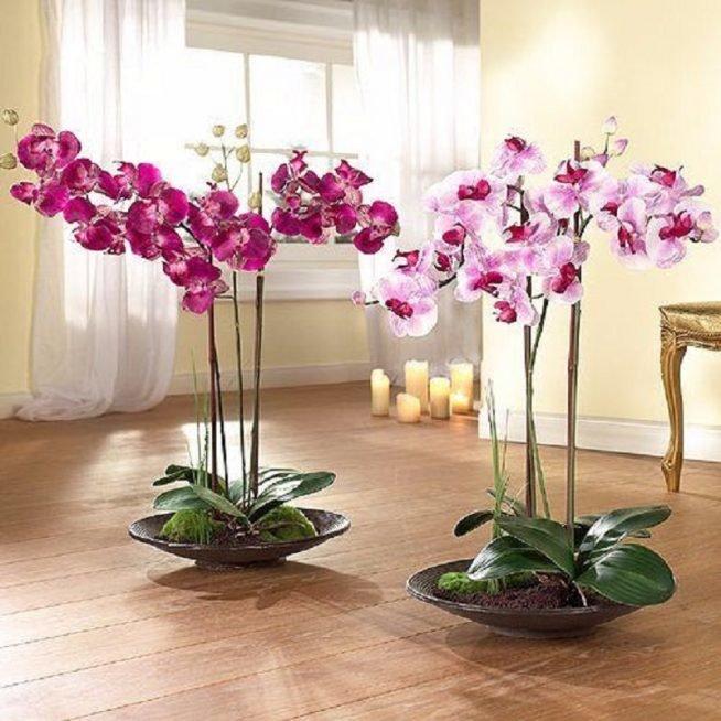 Корзине оптом, заказать живые цветы на домашних условиях