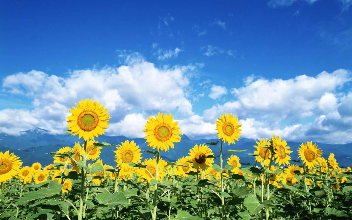 Дню, картинки о начале лета