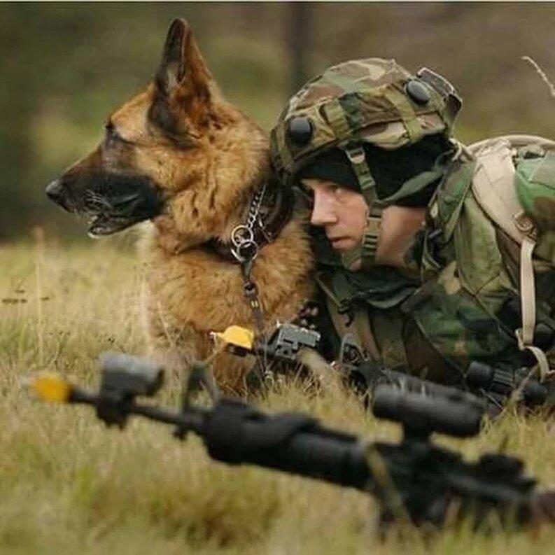 пилоты картинки военные животные постоянно присылала