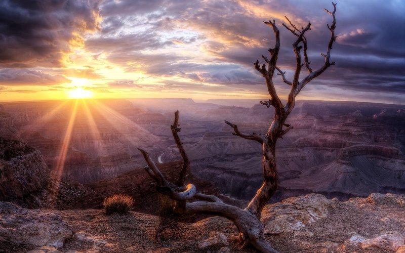 Засохшее дерево на фоне заката в каньоне.
