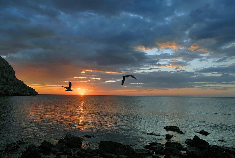 Чайки над морем на фоне восходящего солнца.