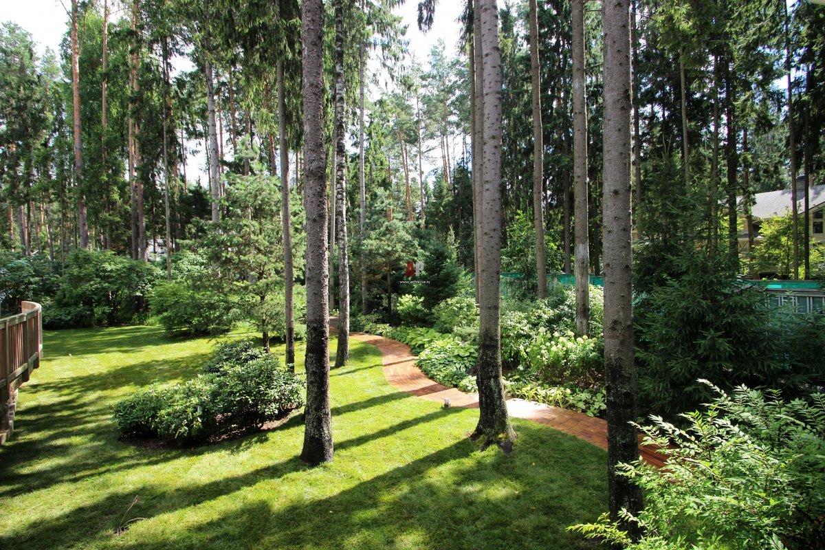 двор оренбурга красивые участки с соснами фото кустарнике можно