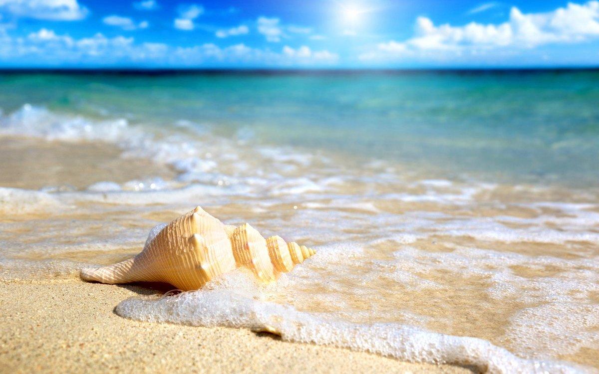 Картинки ракушек на море