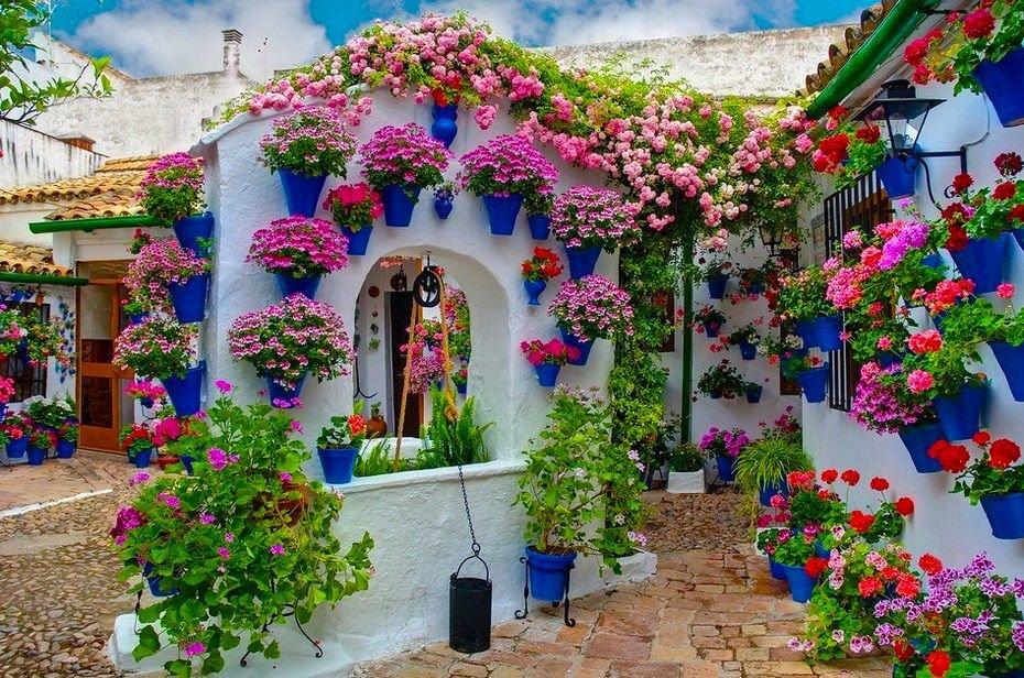 Цветы купить в крыму домик