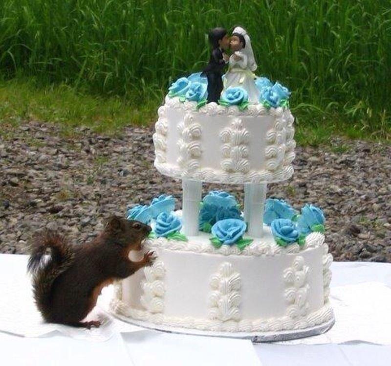 Смешная картинка про тортик