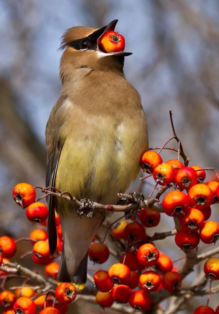 Осенние птицы фото с названиями