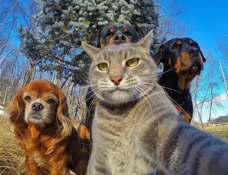 Фото картинки приколы 2015, котом