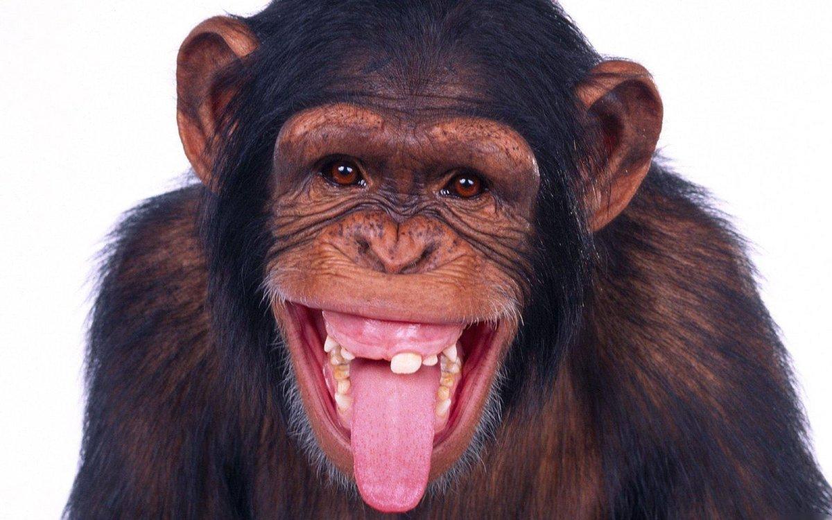 Прикольные картинки на аву обезьянки, открытки сентября