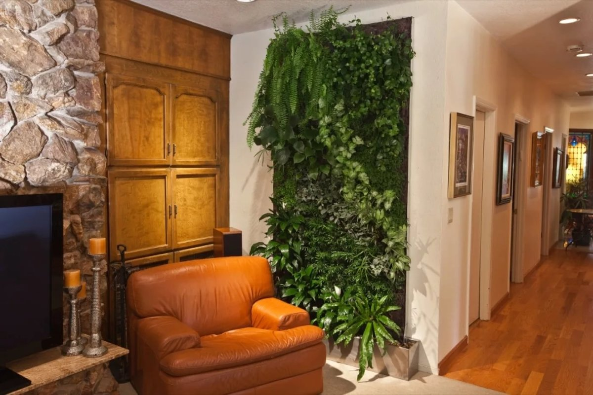 мой картинки с растениями в квартире нашем