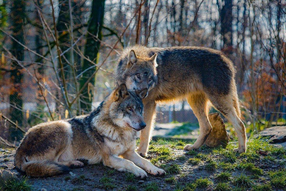 Картинки волчата с надписями