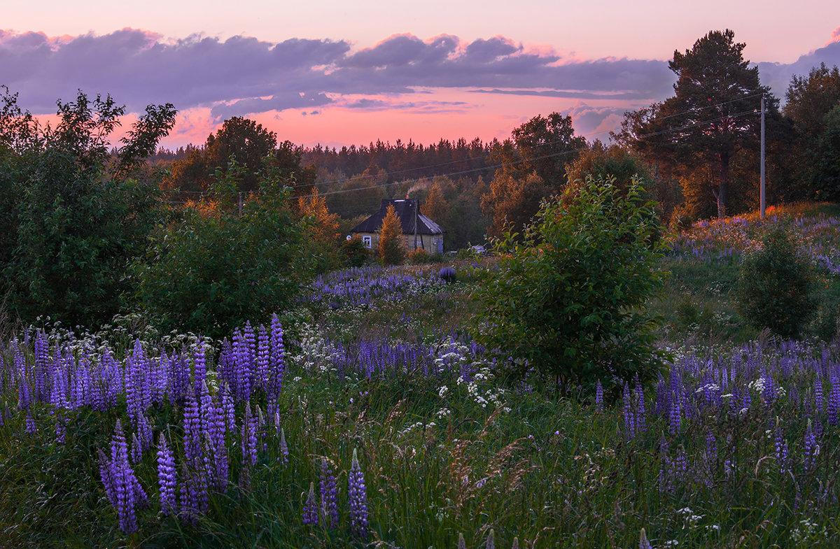Картинки летний вечер в саду