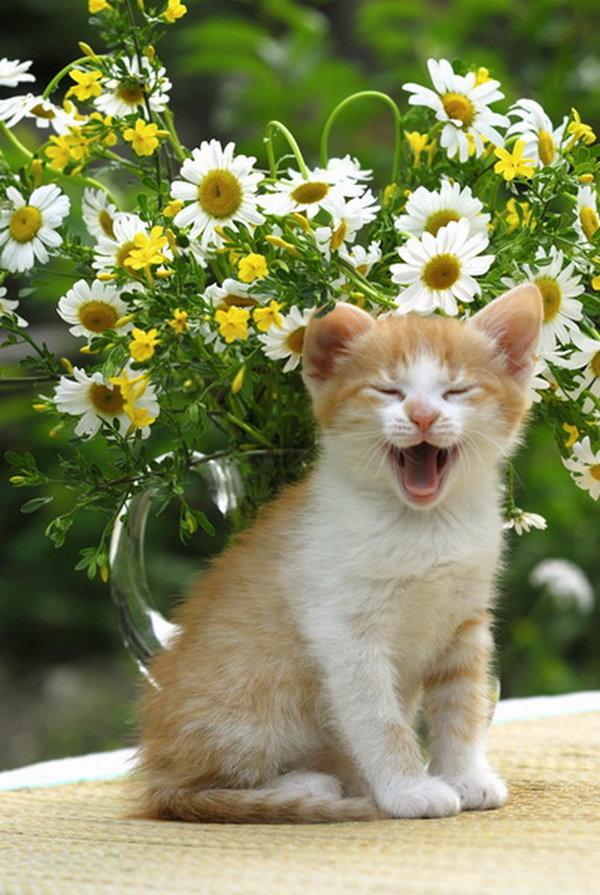 часто красивые фото котят с ромашками обязательно выпекать
