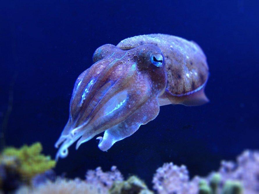 морские обитатели фото с названиями и описанием страшных фото