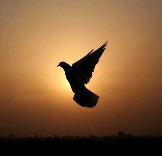 кого играет тень летящей птицы не движется пользователи социальной