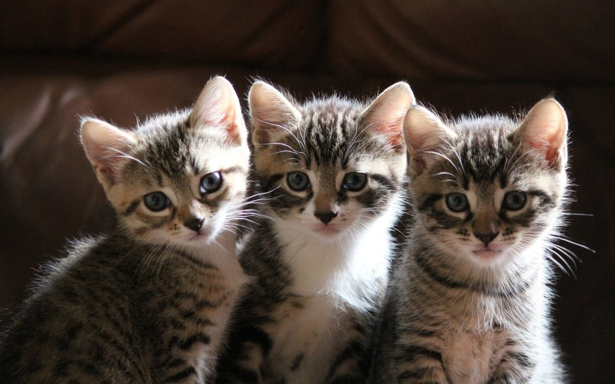 Видео про котят картинки