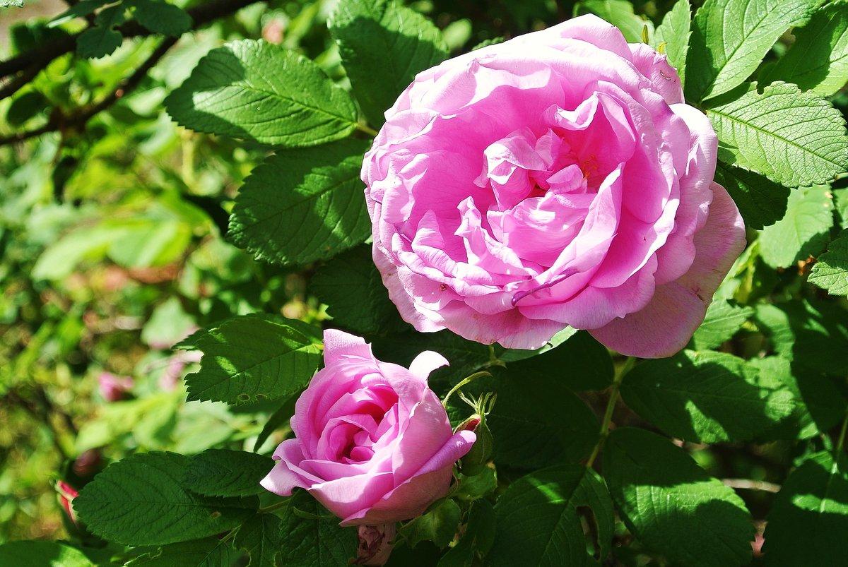 самая морщинистые розы фото зара готовы предложить