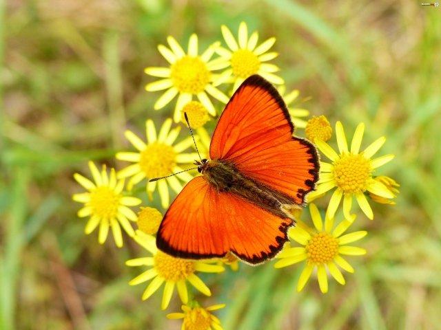 Открытка «Бабочка на цветке» » Сделай сам 48